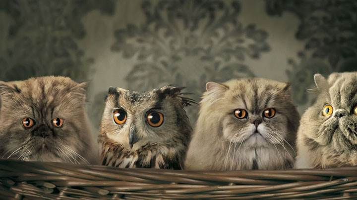 Little Cats And Owl in Basket